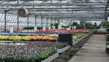 Curso Gratuito Postgrado en Agrojardinería y Composiciones Florales