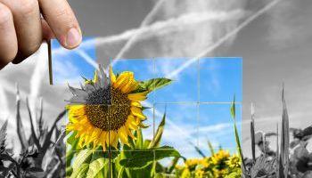 Curso Gratuito Especialista en Jardinería y Técnicas de Arte Floral