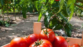 Curso Gratuito Técnico Profesional en Gestión e Incorporación a la Empresa Agraria