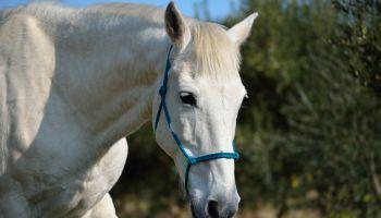Curso Gratuito Monitor de Equitación