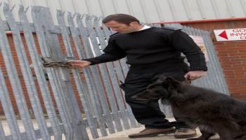 Curso gratuito Modificación de Conductas No Deseadas en Perros