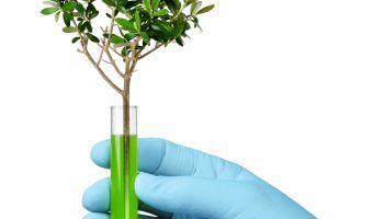 Curso Gratuito Monitor de Medio Ambiente y Gestión Ambiental + Monitor de Actividades Físico-Deportivas en el Medio Ambiente (Doble Titulación + 4 Créditos ECTS)