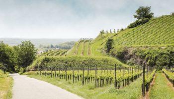 Curso gratuito Mantenimiento y Mejora de Elementos Vegetales (Online)